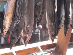 干し秋刀魚