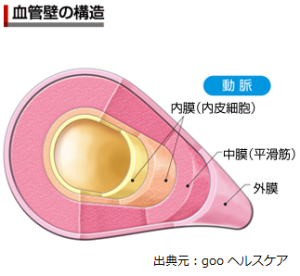血管壁の構造